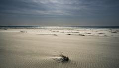 荒れた海岸