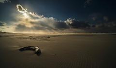 砂浜の記憶