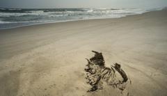 砂に描いた絵