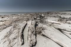 この頃の砂浜 1