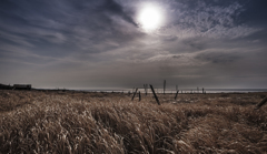 冬枯れの海