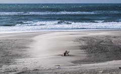 砂嵐の海岸 1