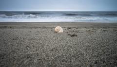 春の海と貝