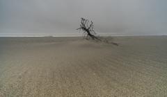 雨の海 2