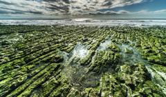 岩海苔の海岸