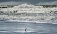 大きな波と小鳥