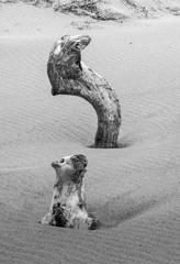 浜辺の小さな物語り