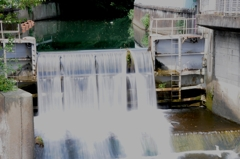 麗しき白滝