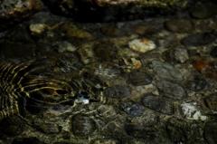 アメンボのいる水景