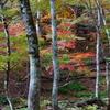 芦生の森2