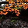 京・彩の季節 3