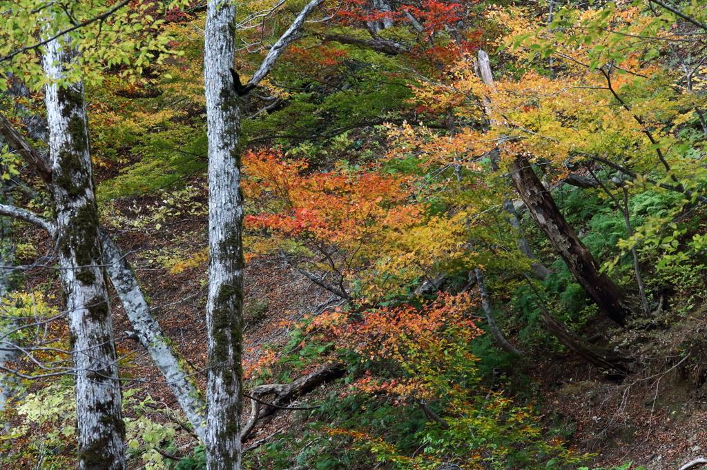 芦生の森4