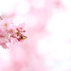 春の日に8