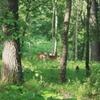森の侵入者