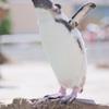 私はペンギン