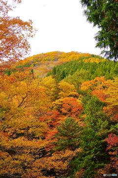 秋、特盛り
