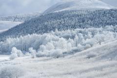 霧ヶ峰の冬3