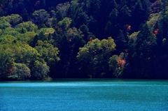 早秋の青い池