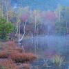 女神たちの池
