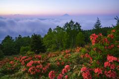 萌える甘利山から