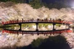 春陽橋の春