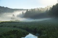 目覚めの湿原