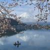 桜 frame