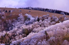 雪の華の丘にて