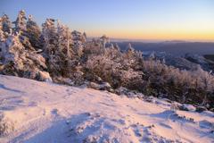 凍える木々に
