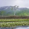水芭蕉の季節
