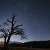 星空と老木
