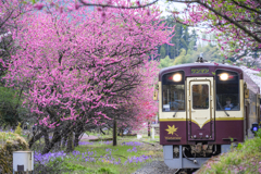 花桃と列車