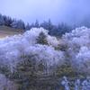 霧氷・樹氷