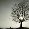 太陽樹とスナイパー