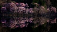 Cherry Reflection