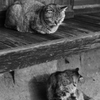 どら猫二人組