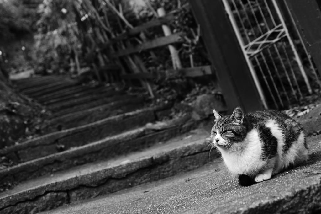 猫の細道にて