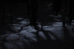 月明かりのきらめき
