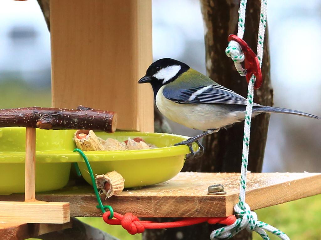 庭の可愛い小鳥たち2
