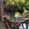 庭の可愛い小鳥たち1