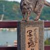 尾道 坂道の猫