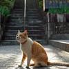尾道・坂道の猫