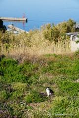 港が見える丘ニャン