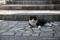 坂の上の猫