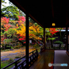 斎藤家の庭