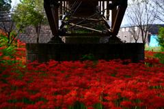 Under the bridge2
