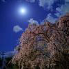 スーパームーンと夜桜