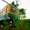 かぼちゃ電車とコスモス
