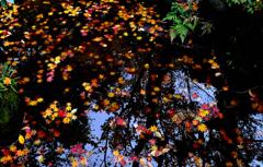 沈みゆく黄色と赤の落ち葉かな
