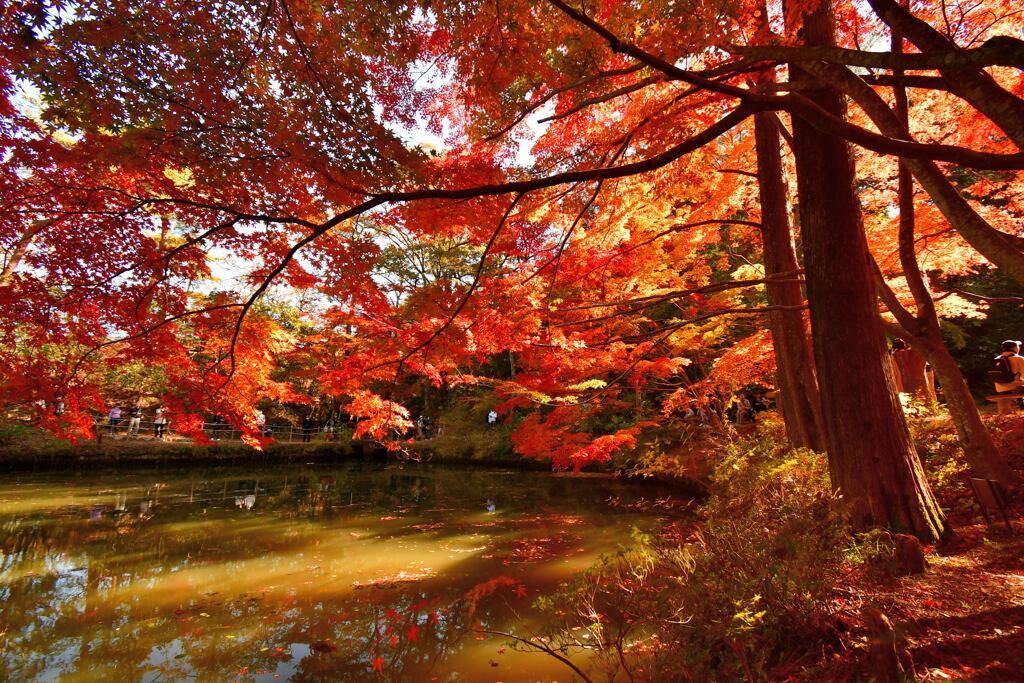 神戸市立森林植物園⑦